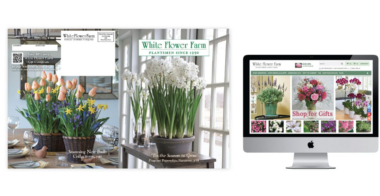 Fine white flower farm gift certificate pictures inspiration white flower farm graphic design mightylinksfo Images